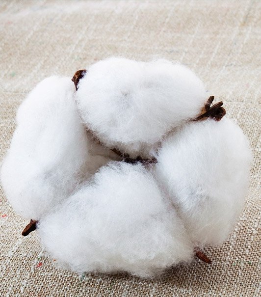 Cotton Mill